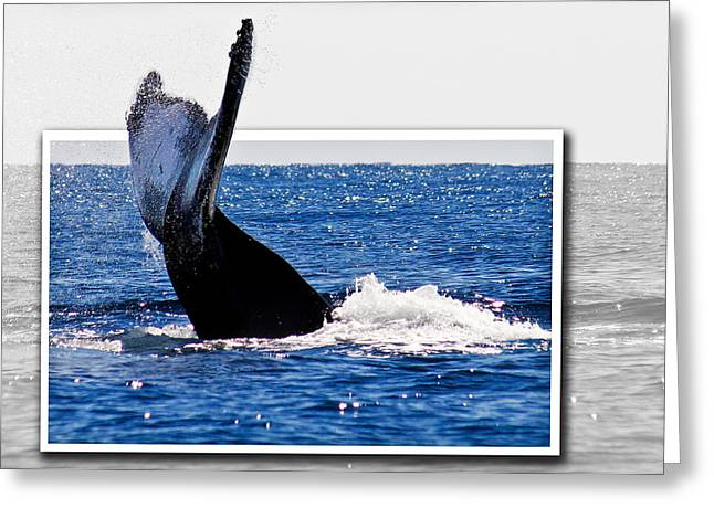 Whale Tail Greeting Card by Jean Noren