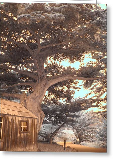 Whaler's Cabin Greeting Card