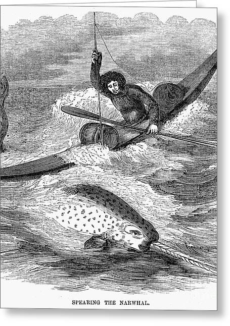 Whaling: Narwhals Greeting Card