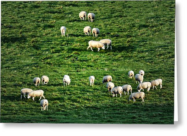 What The Flock Greeting Card by Bill Cannon