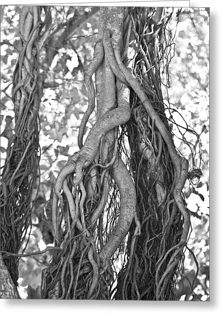 What Trees Know Greeting Card by Betsy Knapp