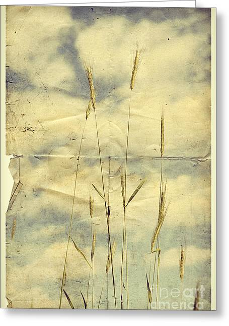 Wheat Against Cloudy Sky Greeting Card by HD Connelly