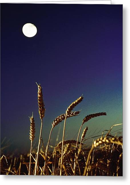 Wheat Field At Night Under The Moon Greeting Card by The Irish Image Collection