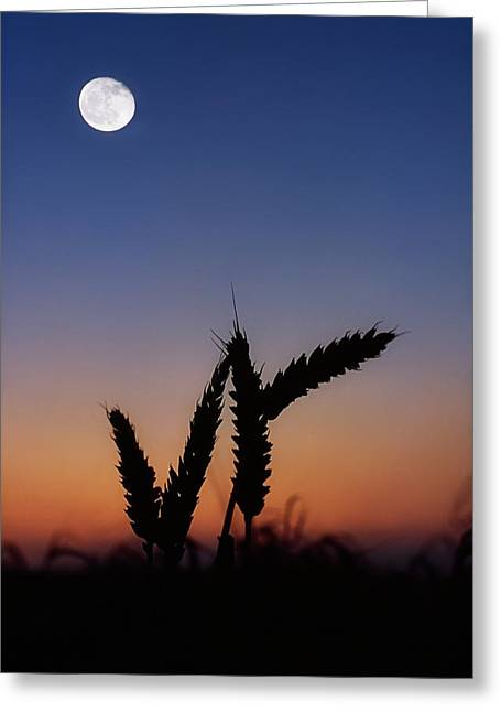 Wheat, Harvest Moon Greeting Card