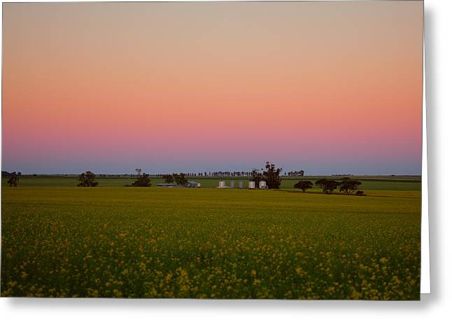 Wheatbelt Country Greeting Card by Serene Maisey