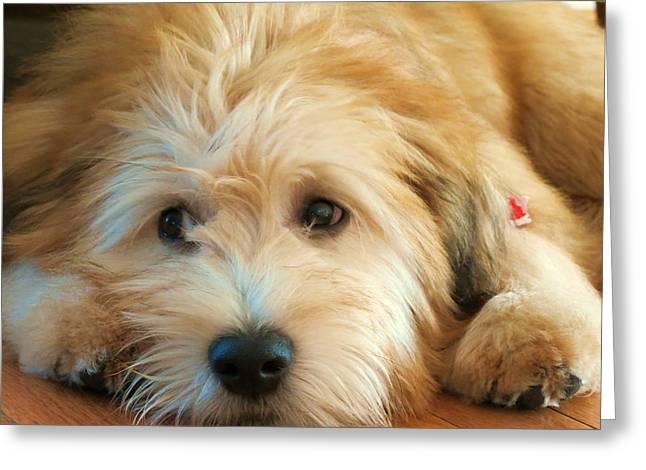 Wheaten Terrier 1 Greeting Card by Vijay Sharon Govender