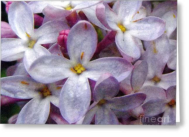When Lilacs Last In The Dooryard Bloom'd Greeting Card by Janeen Wassink Searles