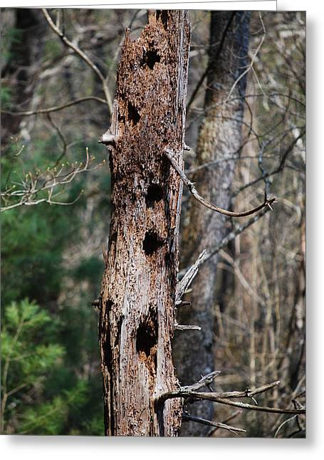 When Woodpeckers Attack Greeting Card by Carrie Munoz