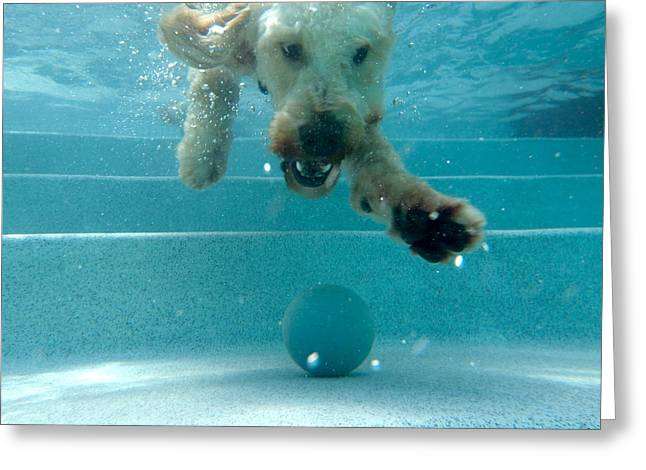 Where Is My Ball Greeting Card by Juan Pisani