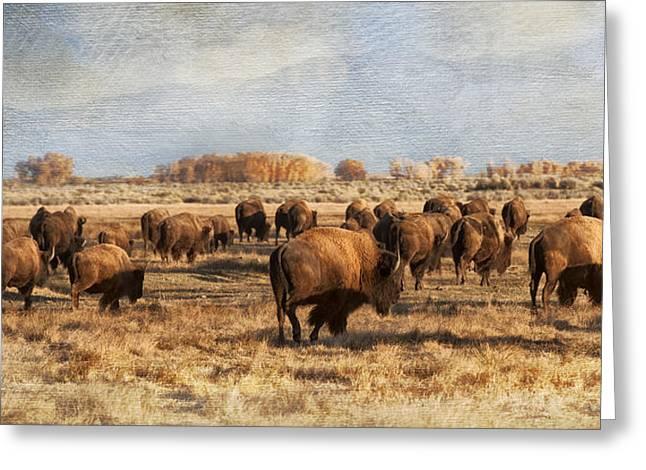 Where The Buffalo Roam Greeting Card
