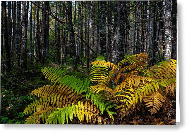 Where The Ferns Grow Greeting Card