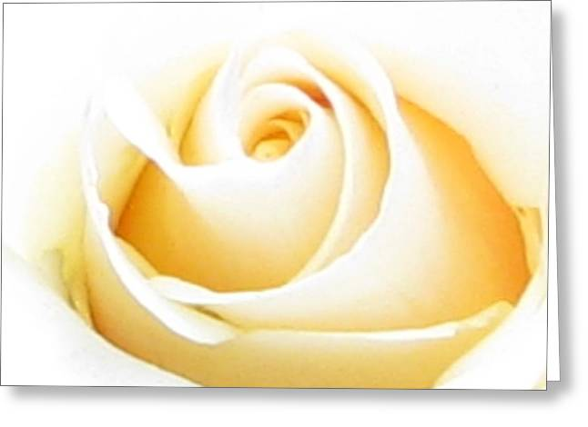 Whipped Butter Cream Rose Micros Greeting Card