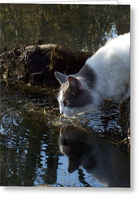 Whiskers In The Water Greeting Card