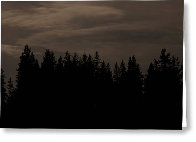 Whispering Pines Greeting Card by Arlyn Petrie