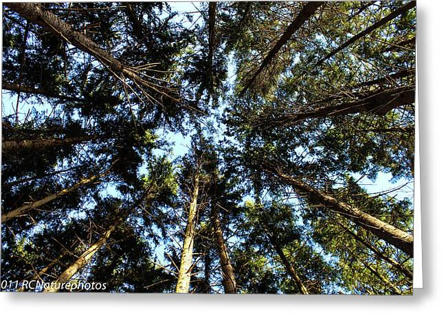 Greeting Card featuring the photograph Whispering Pines by Rachel Cohen