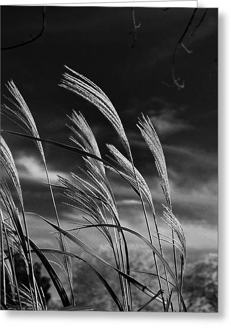 Whispering Wind Greeting Card by Dan Crosby