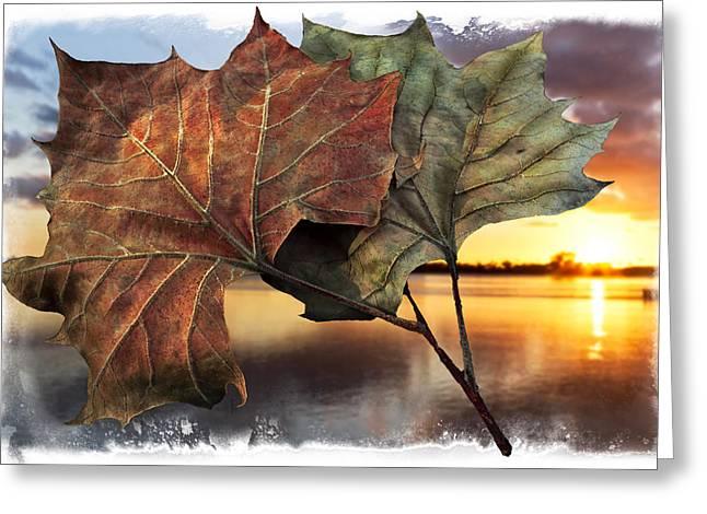 Whispers In The Wind Greeting Card by Debra and Dave Vanderlaan