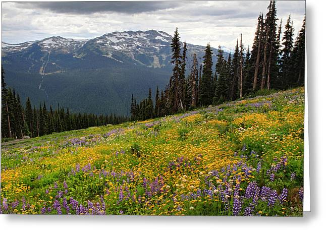 Whistler Blackcomb Wild Flowers In Bloom Greeting Card by Pierre Leclerc Photography