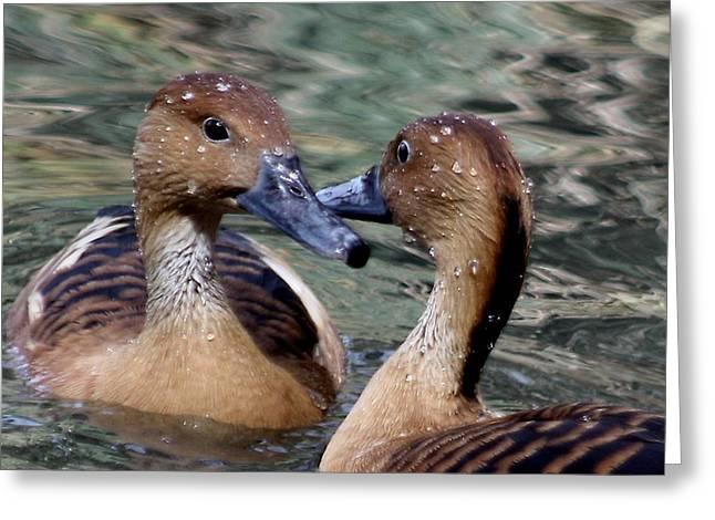 Whistling Ducks Greeting Card by Paulette Thomas