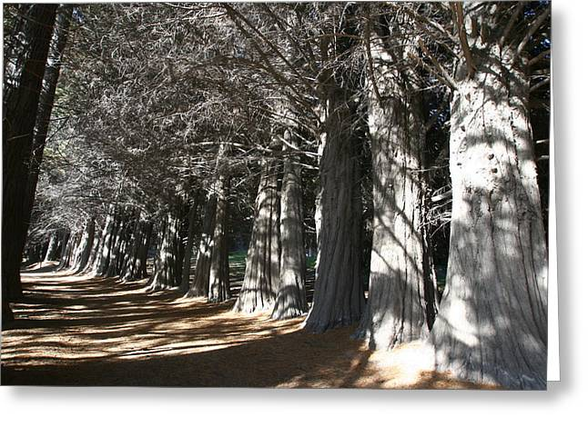 White Alley Greeting Card