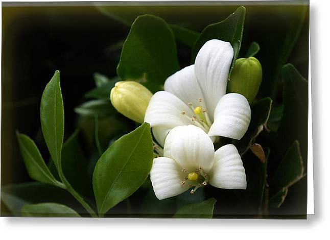 White Beauty Greeting Card by Elisabeth Dubois