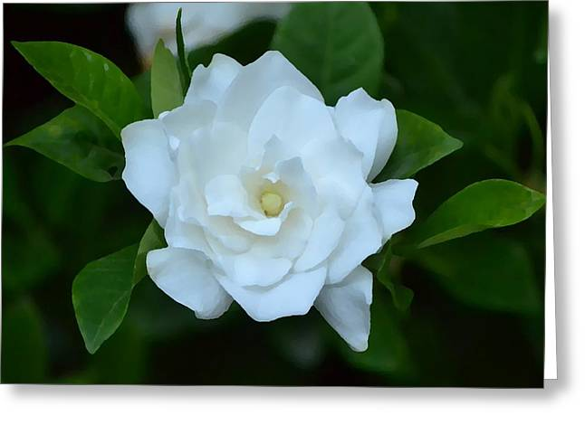 Greeting Card featuring the photograph White Beauty by Rima Biswas