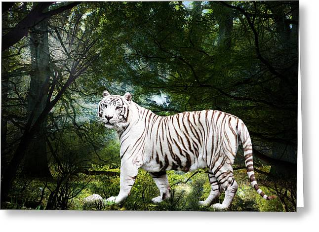 White Bengal Greeting Card