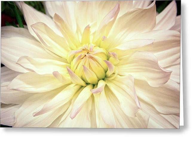 White Blossom Greeting Card by Steve McKinzie