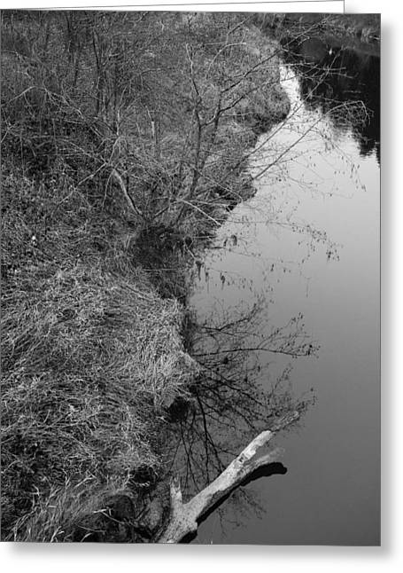 Greeting Card featuring the photograph White Branch Riverside  by Kathleen Grace