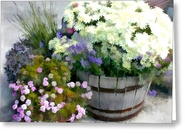 White Chrysanthemums In A Barrel Greeting Card by Elaine Plesser