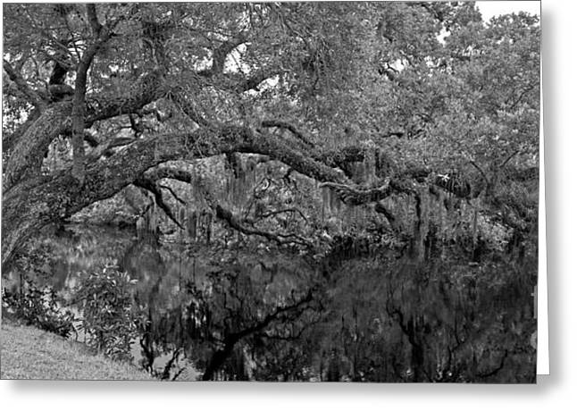 Greeting Card featuring the photograph White City Oak Pano by Larry Nieland