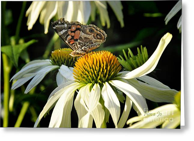 Greeting Card featuring the photograph White Cone Flower With Angel by Nava Thompson