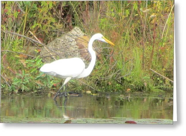 White Crane - Wildlife Greeting Card by Susan Carella