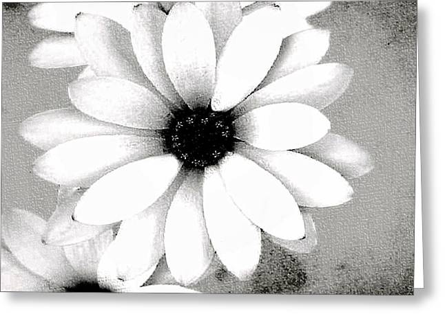 Greeting Card featuring the photograph White Daisy by Tammy Espino