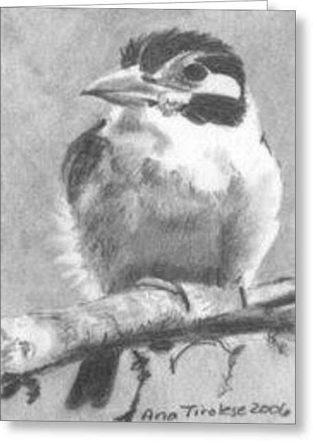 Greeting Card featuring the drawing White Earred Puffbird - Aceo by Ana Tirolese
