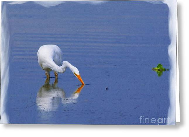 White Egret Hunting For A Fish Greeting Card by John  Kolenberg