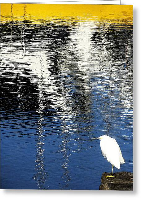 Greeting Card featuring the digital art White Egret On Dock With Colorful Reflections by Anne Mott