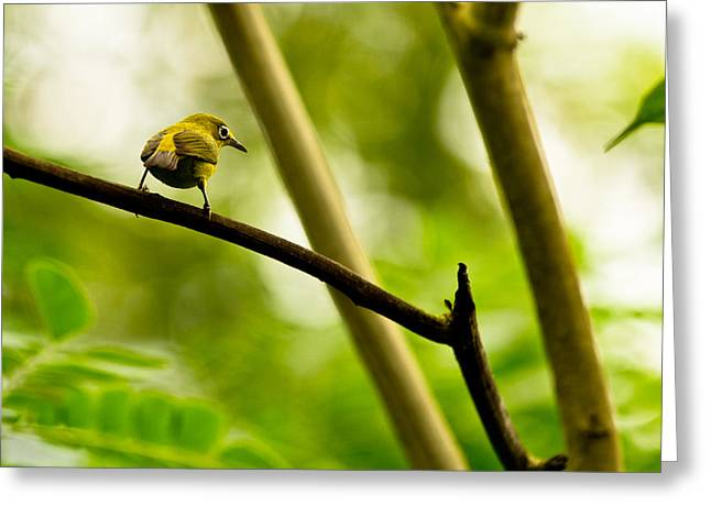Greeting Card featuring the photograph White-eye by Justin Albrecht