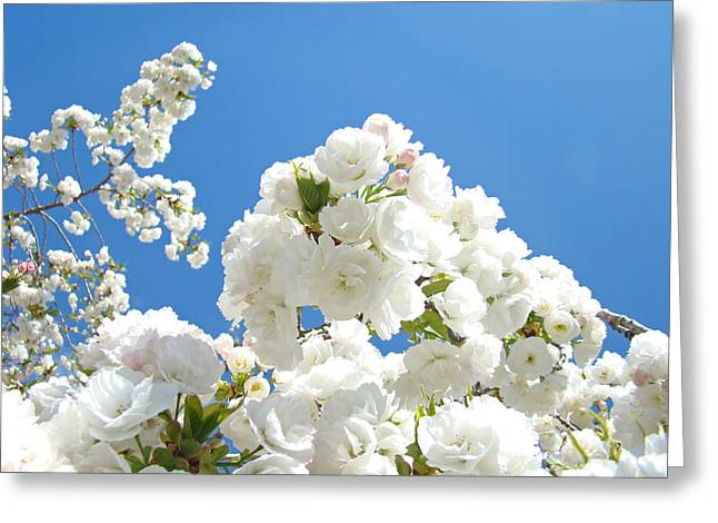 White Floral Blossoms Art Prints Spring Tree Blue Sky Greeting Card by Baslee Troutman