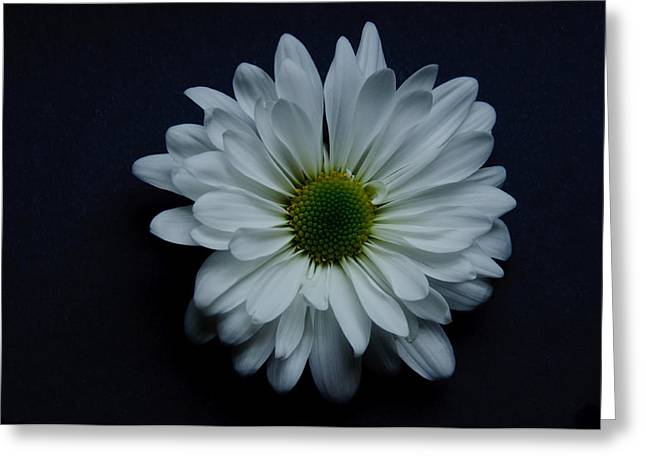 White Flower 1 Greeting Card
