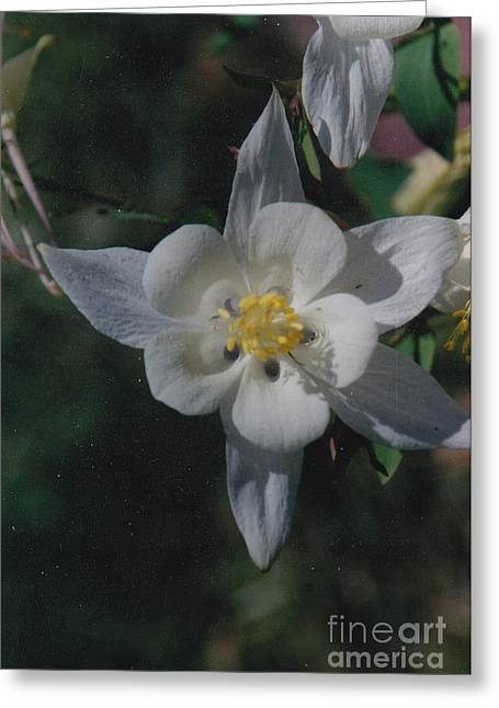 White Flower Splendor Greeting Card