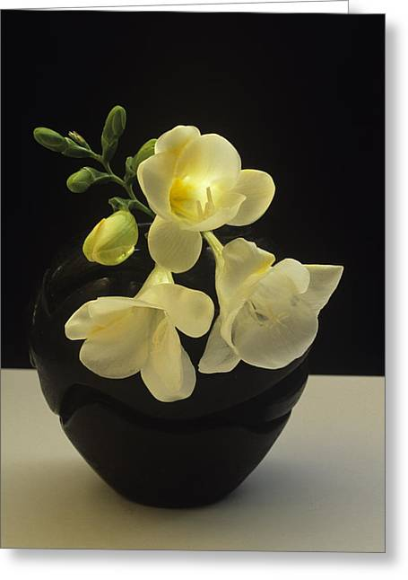 Greeting Card featuring the photograph White Freesias In Black Vase by Susan Rovira