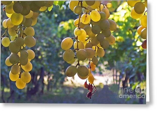 White Grapes Greeting Card by Barbara McMahon