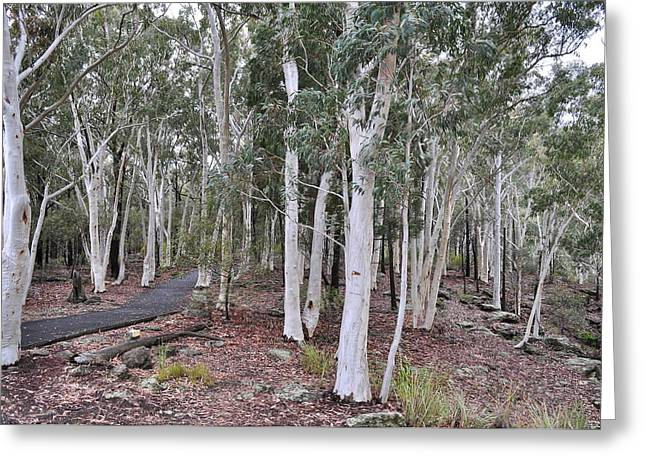 White Gum Trees Greeting Card