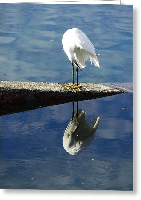 White Heron Greeting Card by Anne Mott