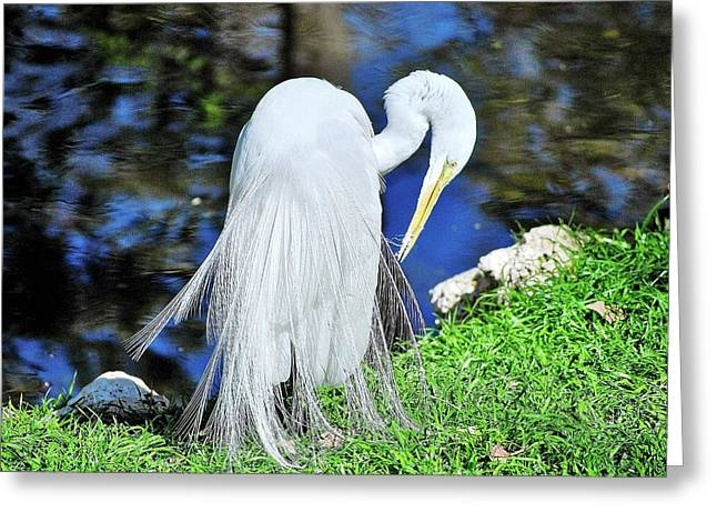 White Heron Greeting Card