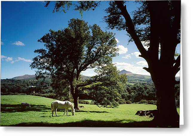 White Horse At Powerscourt, Co Wicklow Greeting Card