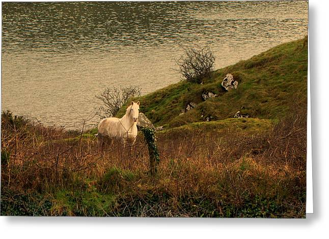 Greeting Card featuring the photograph White Horse by Barbara Walsh