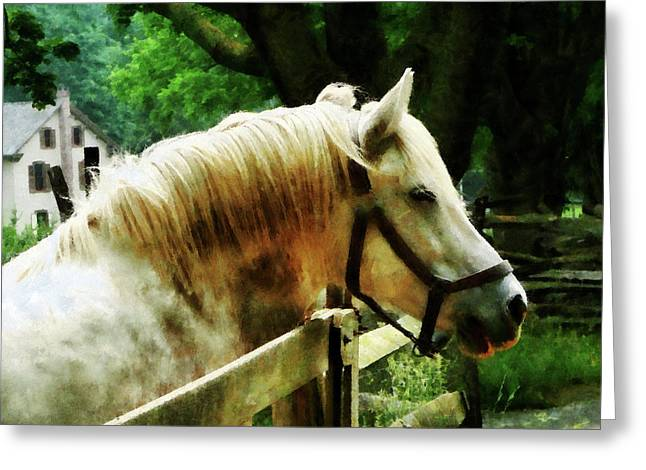 White Horse Closeup Greeting Card by Susan Savad