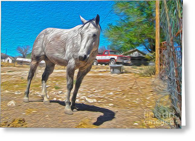 White Horse Greeting Card by Gregory Dyer